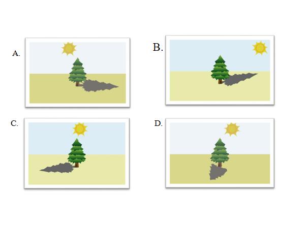 soal hots sd posisi 4 pohon cemaran