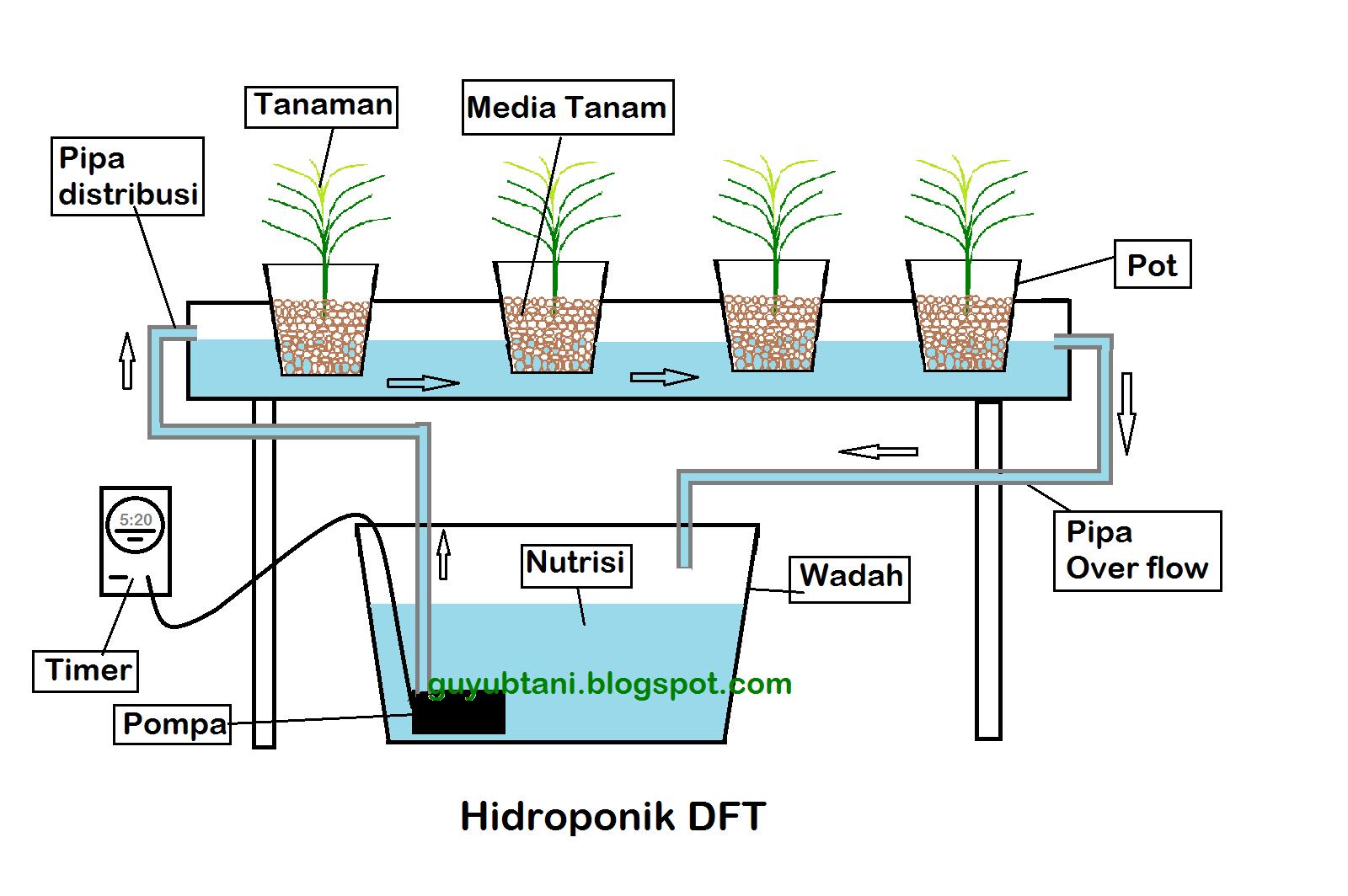 sistem hidroponik dft